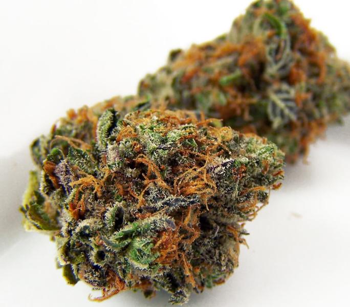 Urban Poison Cannabis Strain
