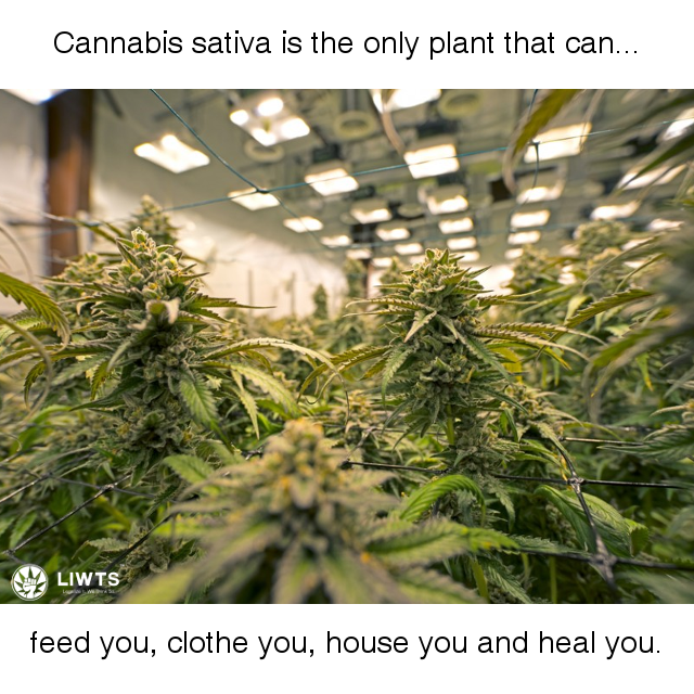 Cannabis Meme, The only plant that can clothe, feed and heal.