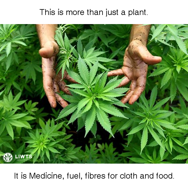 Cannabis is more than just a plant