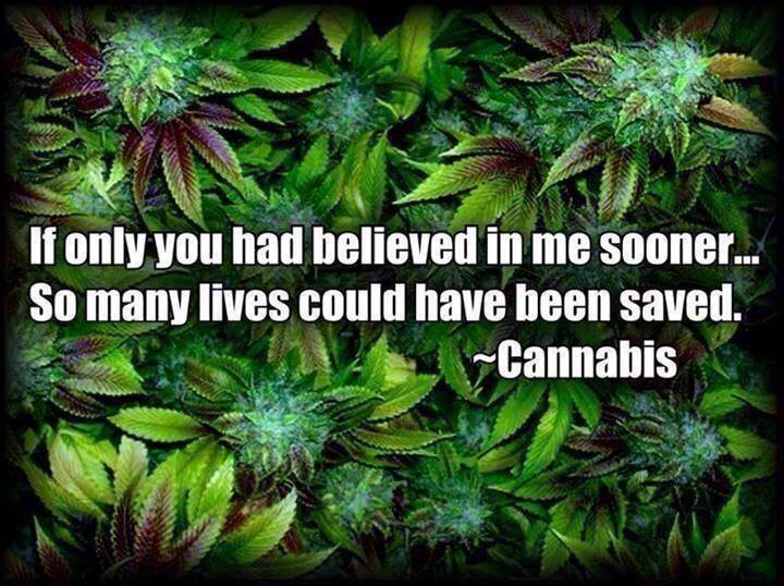 dear world weed meme