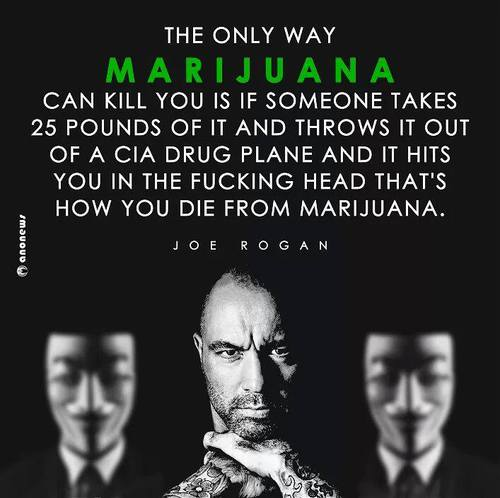 Joe Rogan- The Only Way Cannabis Kills