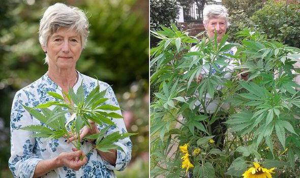 Grandma grows cannabis plant