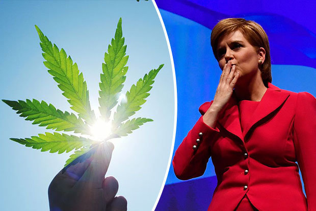 Nicola Sturgeons SNP backs cannabis for medical use