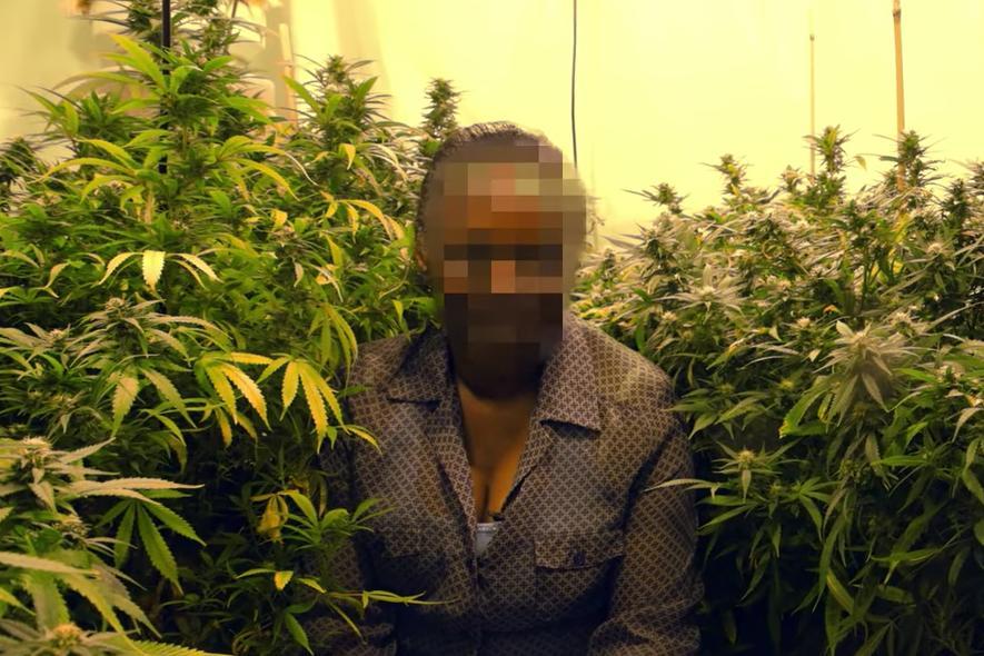 gropper-grandmas-growing-weed-united-kingdom