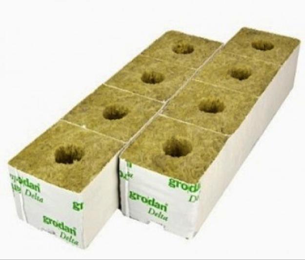 Germinate marijuana seeds using Rockwool cubes