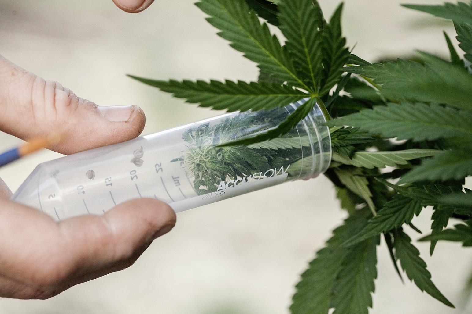 cannabis research 2016