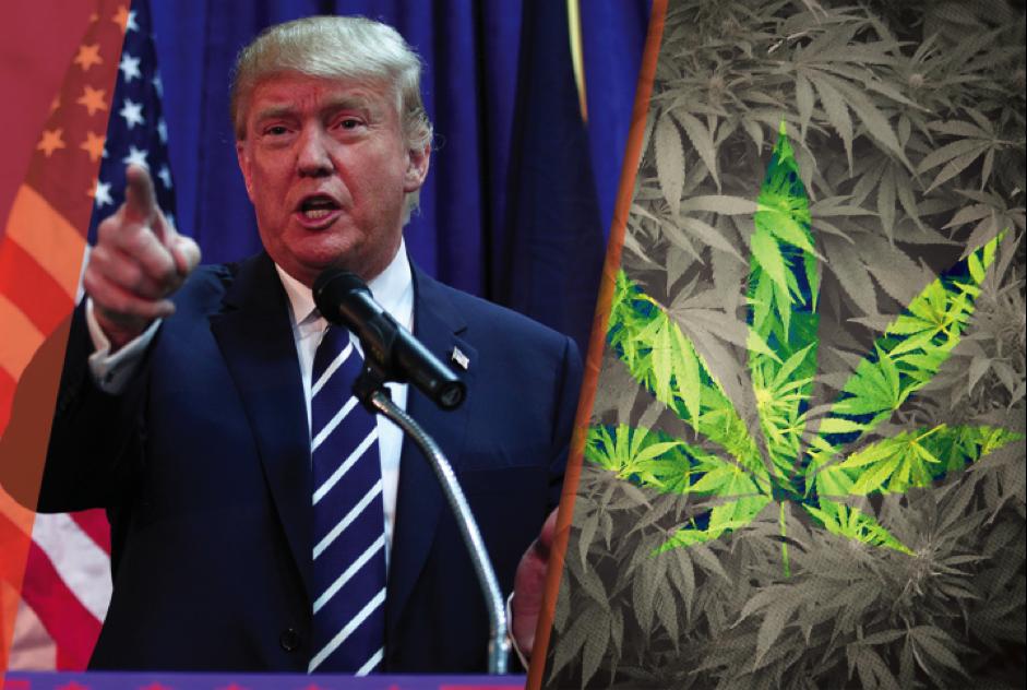 Trump on drugs