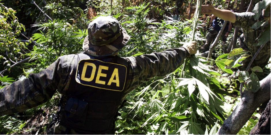 DEA removes cannabis propaganda