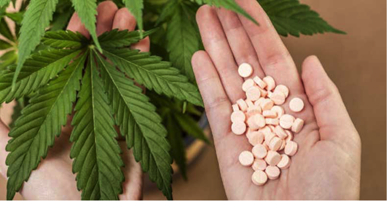cannabis vs opiods