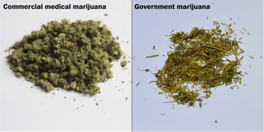 government vs dispensary cannabis