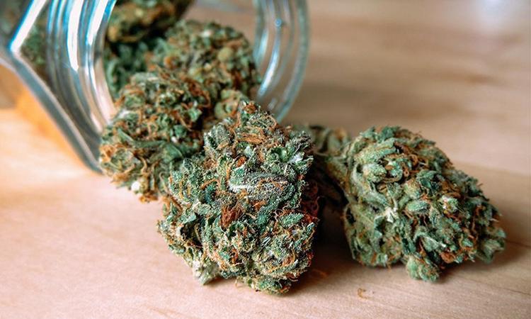 Mexico Legalizes Medical Marijuana