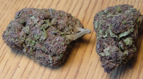 Purple Cream strain cannabis