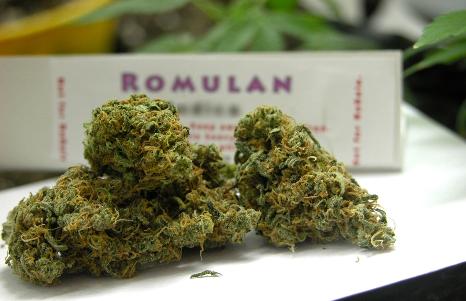 Romulan Strain Review