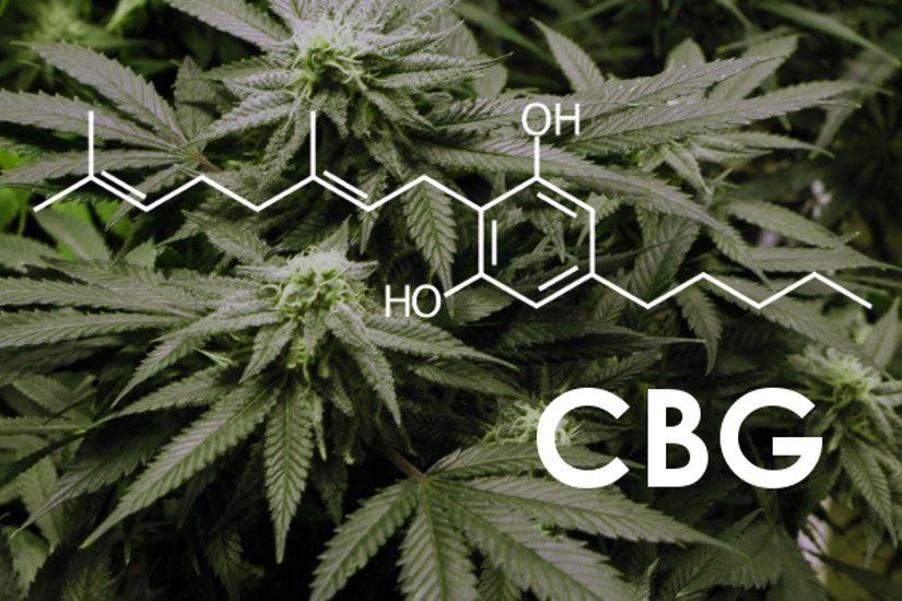 CBG The lesser known cannabinoids